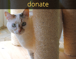 good mews donations